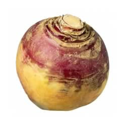 Turnip - Ontario (each)
