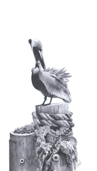 Clean - Brown Pelican