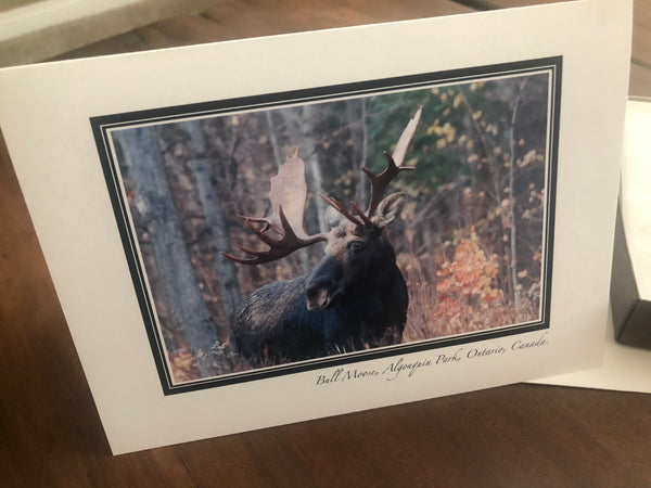 Wildlife Greeting Card Set