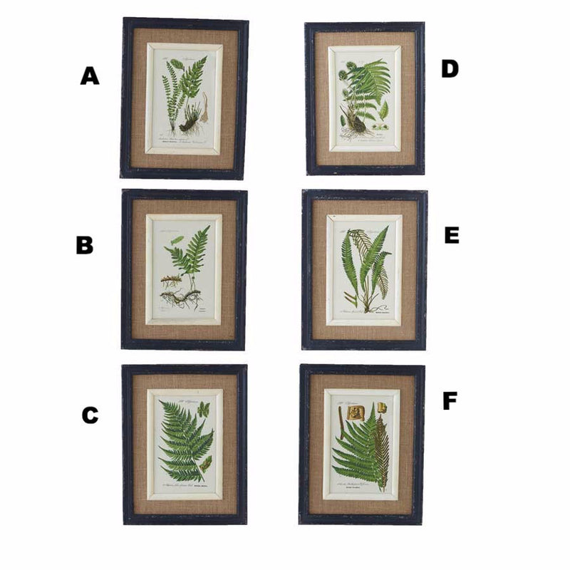 Black Framed Fern Prints