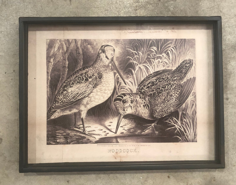 Bird Prints Under Glass