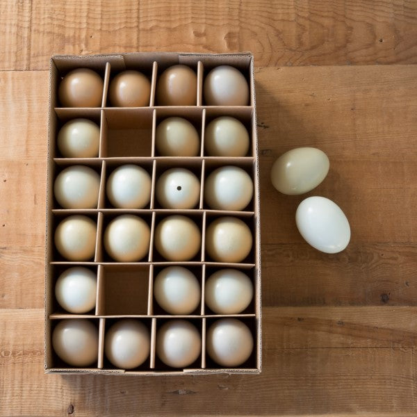 Americana Chicken Eggs