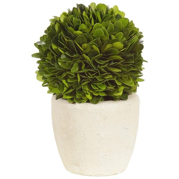 Boxwood Ball in Pot - E.T. Tobey Company