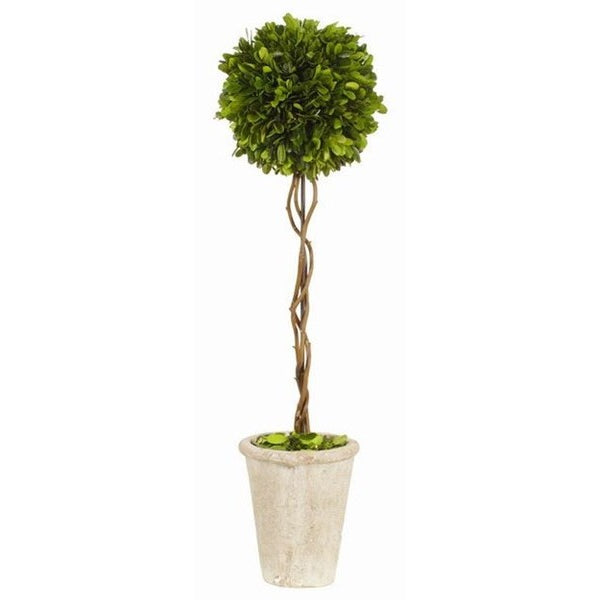 Boxwood Ball Topiary - E.T. Tobey Company
