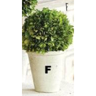 Preserved Boxwood Topiary - E.T. Tobey Company