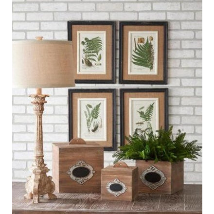 Black Framed Fern Prints - E.T. Tobey Company