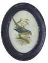 Black Framed Oval Bird Prints