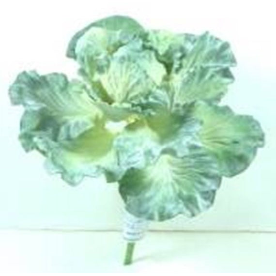 "Cabbage Ornamental 8"" - E.T. Tobey Company"