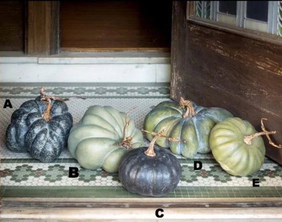 Green Heirloom Pumpkins