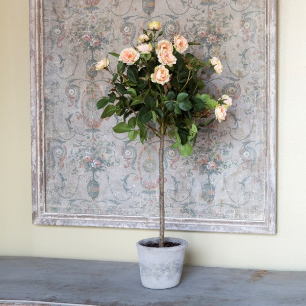Potted Floribunda Rose Topiary - farmhouse spring