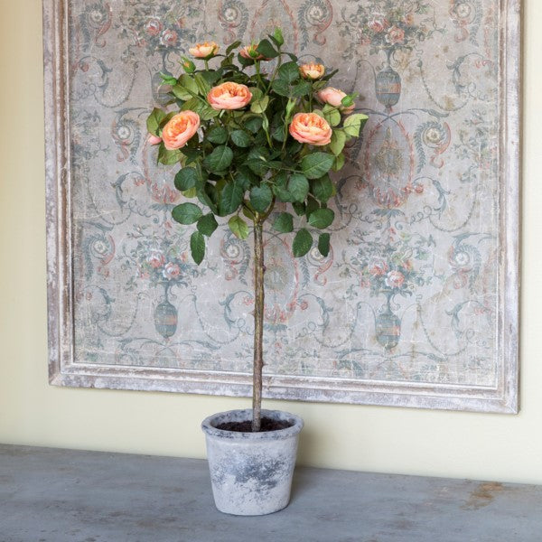 Potted Rose Topiary