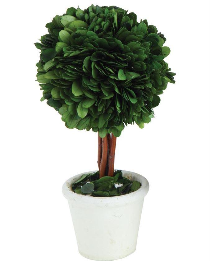 Preserved Boxwood Topiary Ball in White Clay Pot