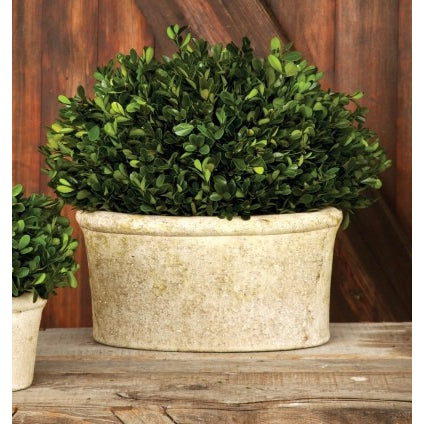 Large Potted Oval Boxwood - E.T. Tobey Company