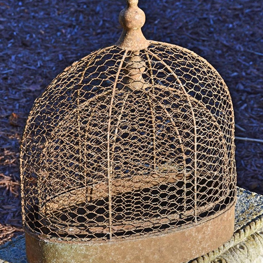Oval Chicken Wire Cloche