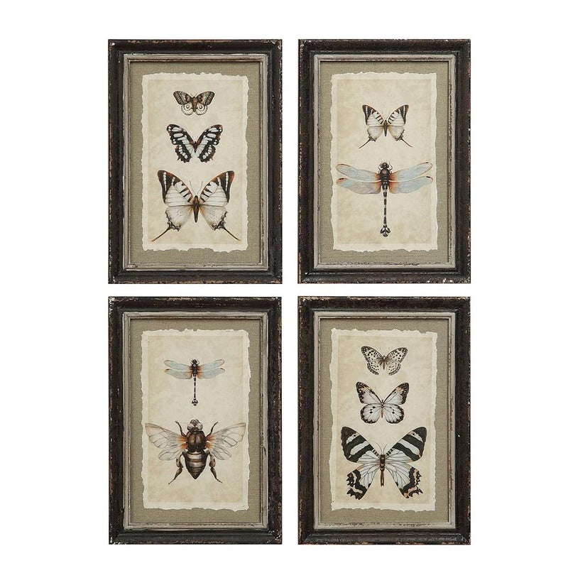 Wood Framed Vintage Reproduction of Insect Print
