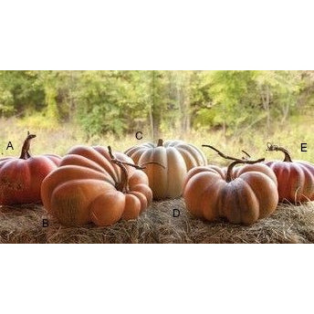 Kentucky Field Pumpkin - E.T. Tobey Company