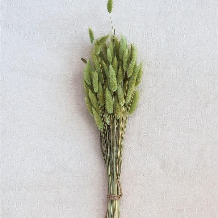 Dried Natural Bunny Tail Grass Bunch
