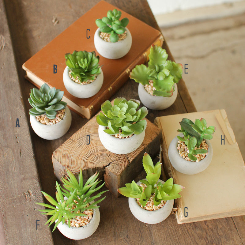 Succulents with Round Cement Pot