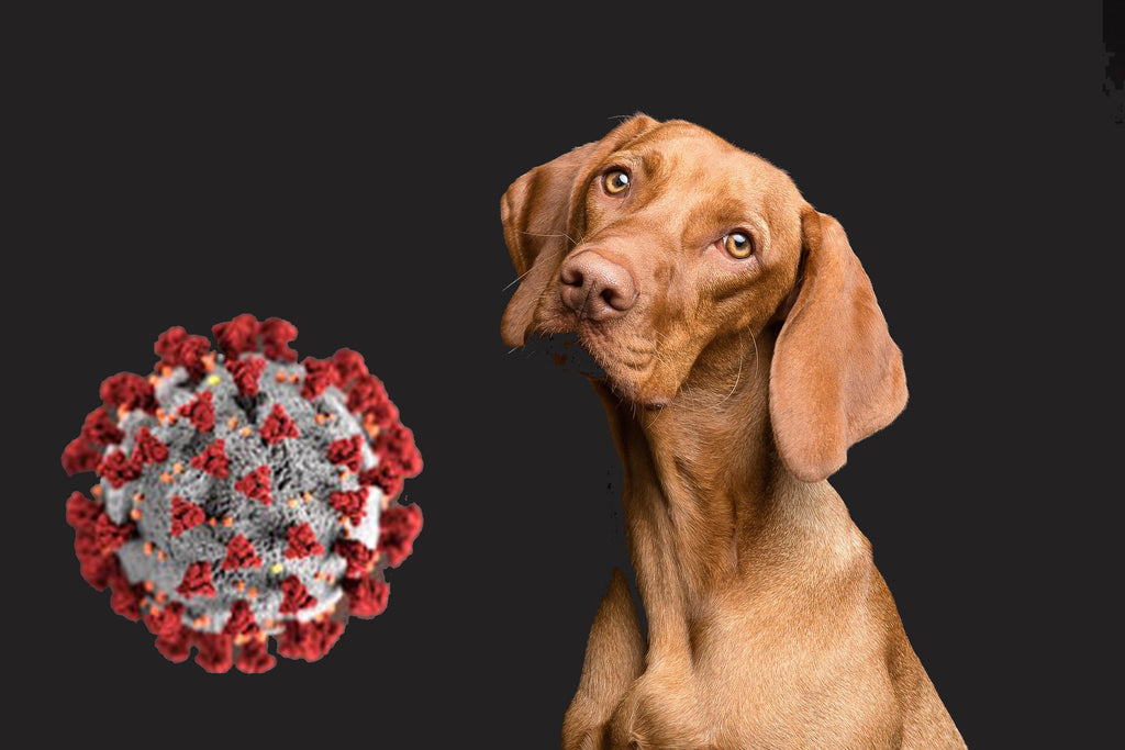 What we know about Coronavirus and the risk to your pets