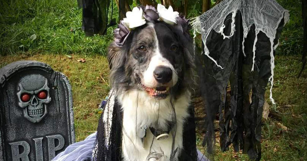 Halloween Tips for Your Pets