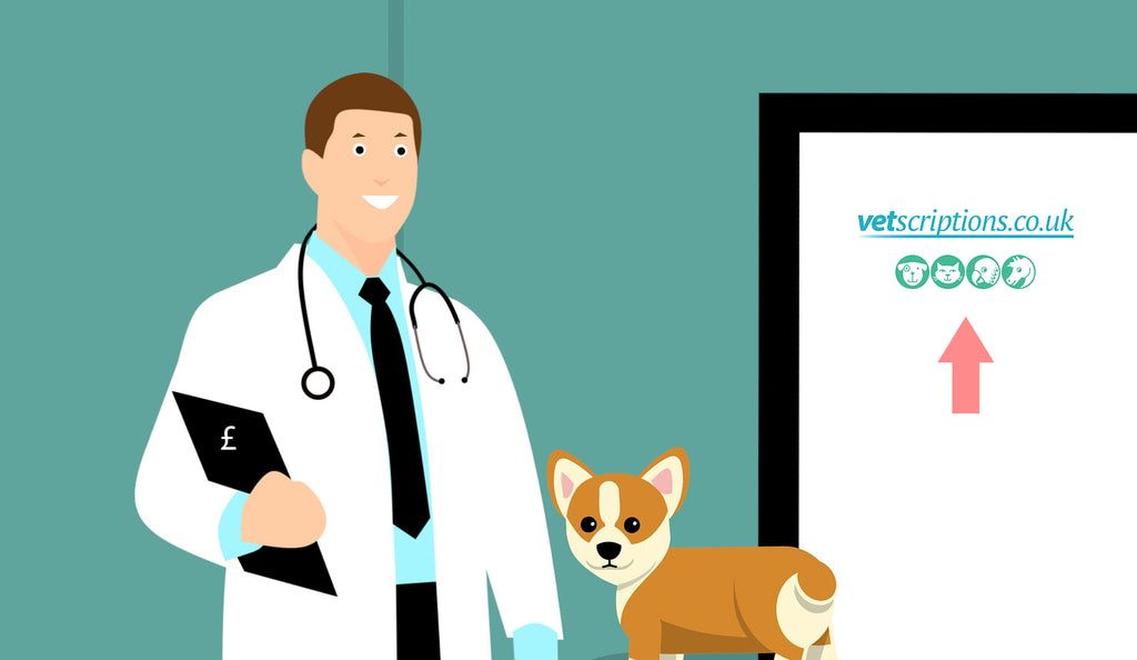 Why are Vets so Expensive?