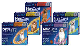 NexGard Spectra Pack of 3 (Prescription Required)