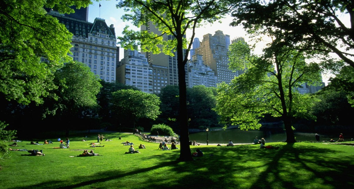 The Tranquility of Central Park