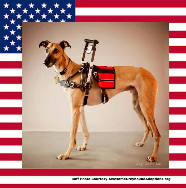 GREYHOUNDS AS VETERANS' SERVICE DOGS