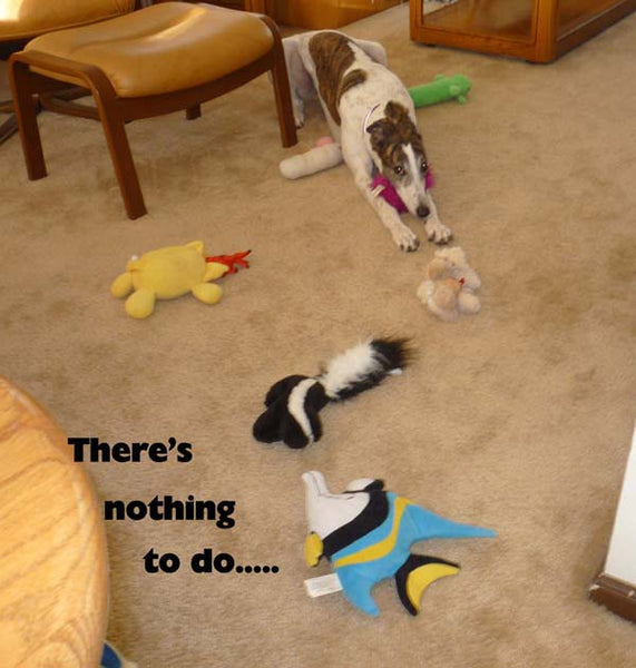 IS YOUR GREYHOUND BORED?