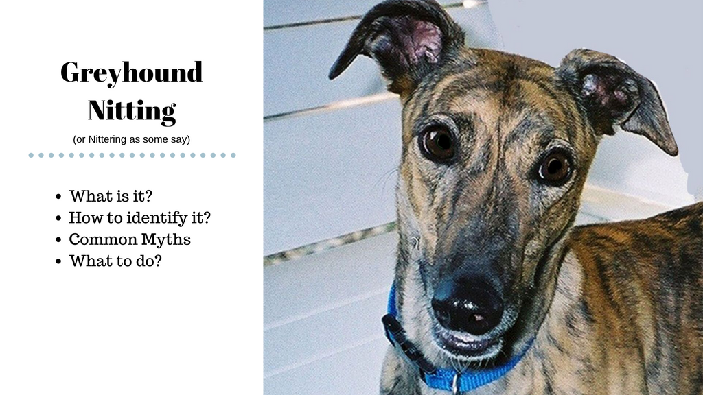 What is Greyhound Nitting?