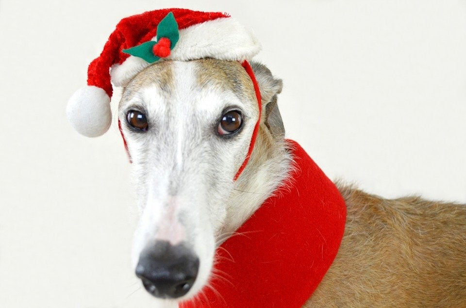 Holiday Safety for Greyhounds