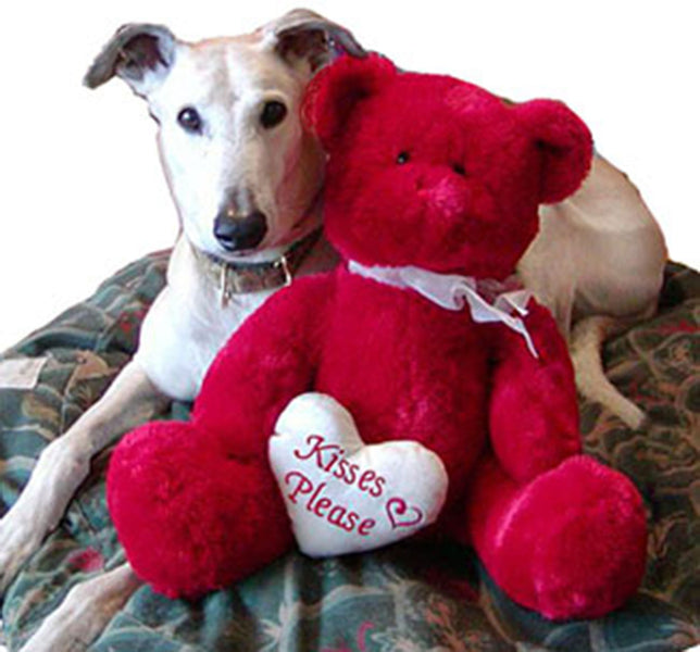 MAKE VALENTINE'S DAY SPECIAL FOR YOUR GREYHOUND