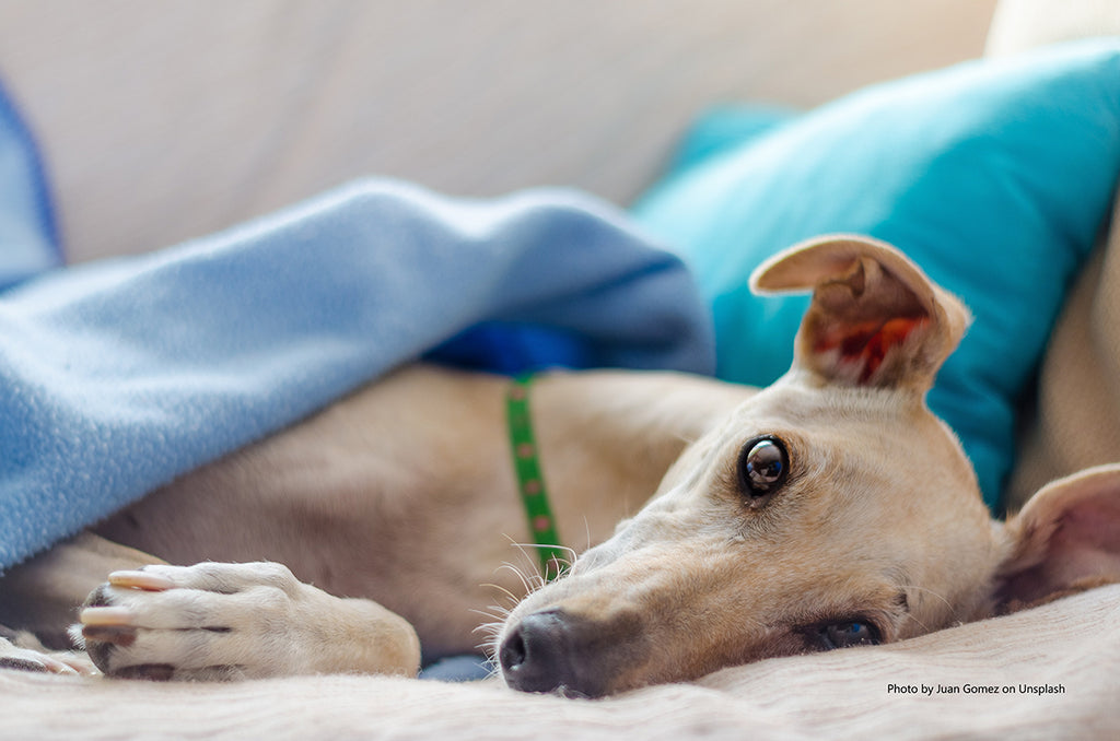 GREYHOUND MYTHS