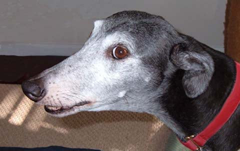 HELP YOUR SENIOR HOUND