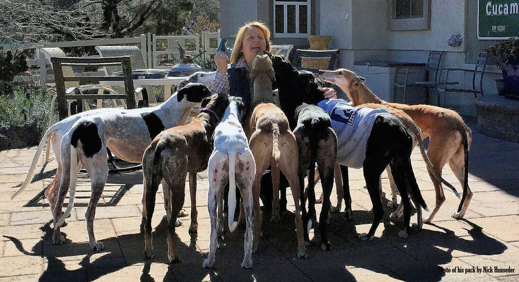 TOP REASONS TO ADOPT A GREYHOUND