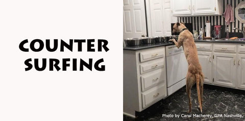 Counter Surfing - GPA Nashville