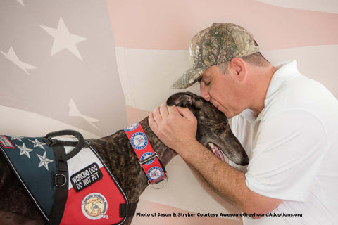 Veteran and greyhound service dog