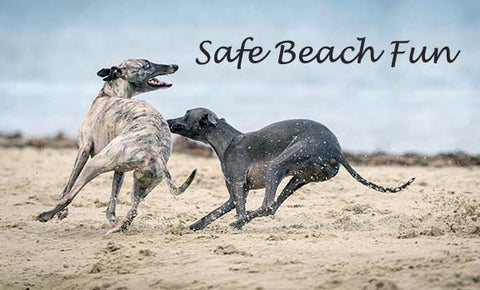 Two Greyhounds on Beach