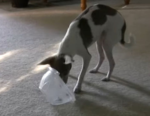 container dog toy