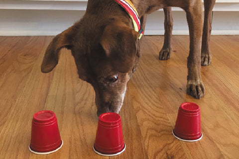 Dog playing cup game