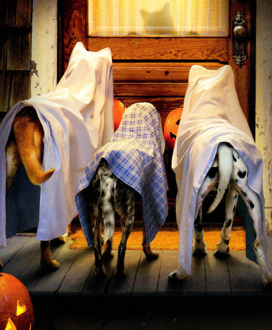 dogs trick or treating