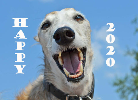 Smiling Greyhound wishes you Happy New Year!