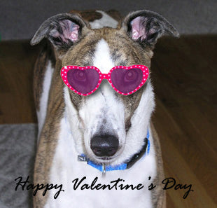 Greyhound in heart glasses