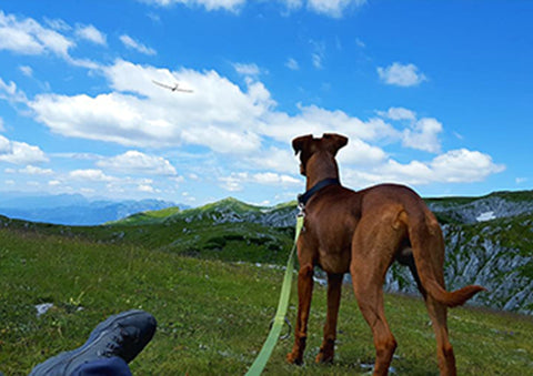 Hiking with greyhound