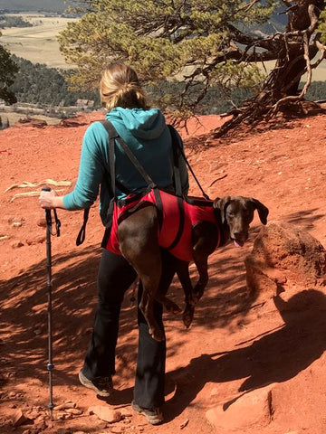 Pack your dog out in a rescue harness