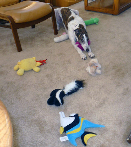 greyhound and toys