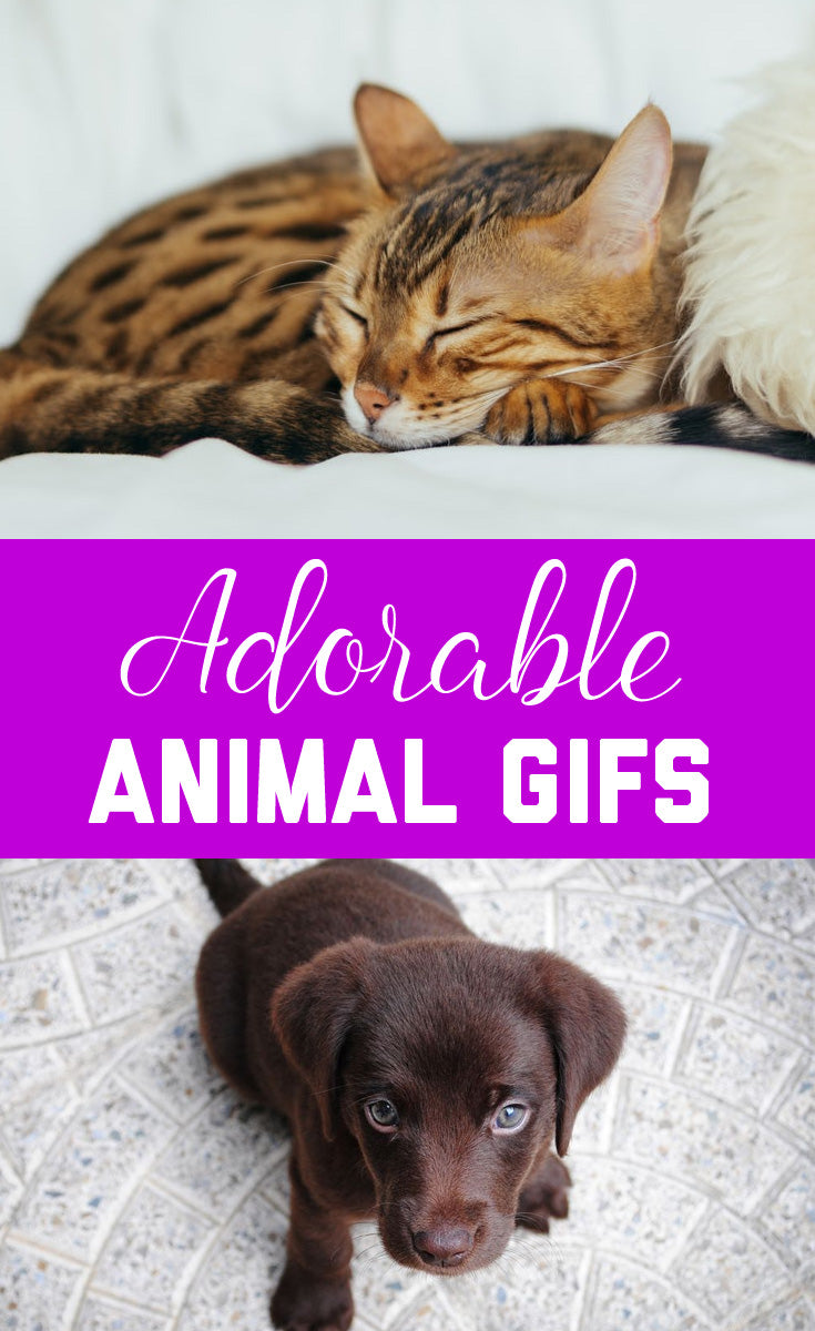 Adorable Animal Gifs