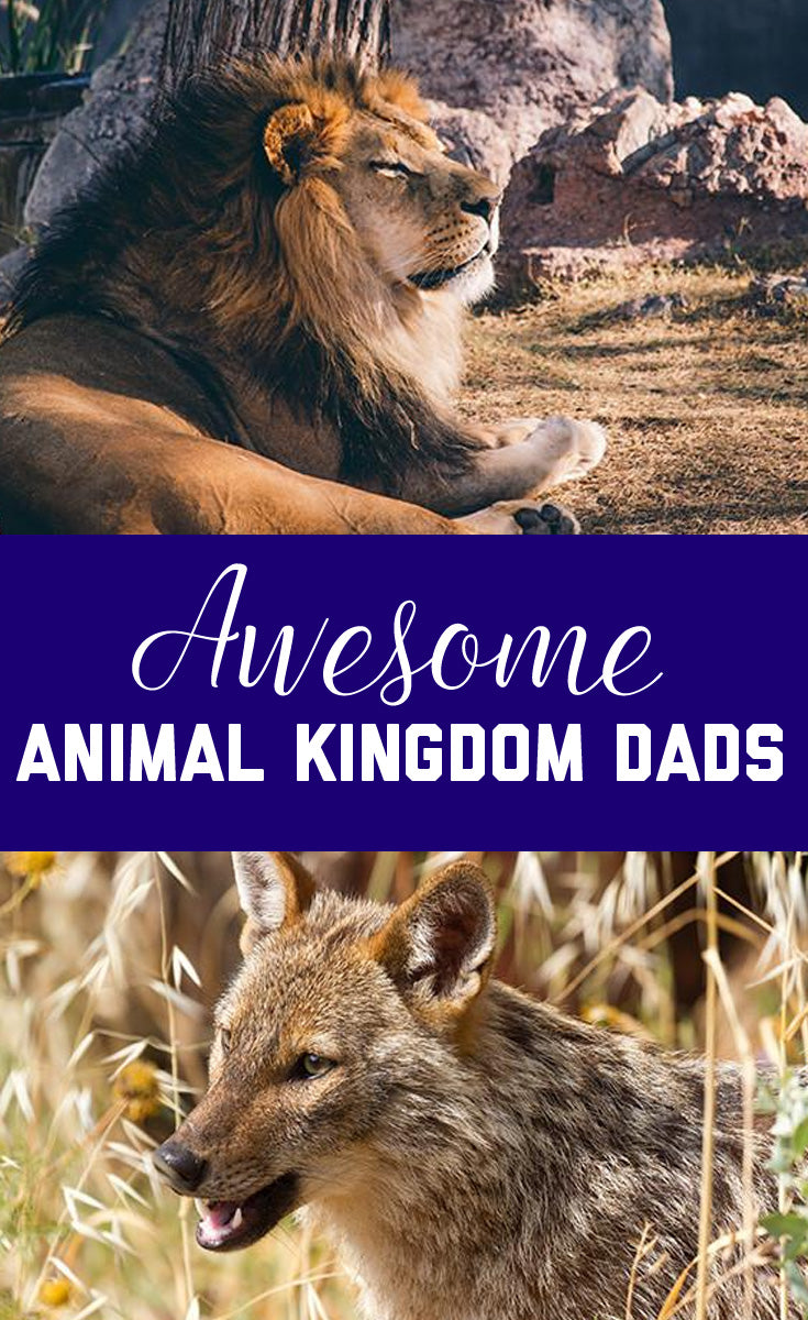 Animal Kingdom Dads