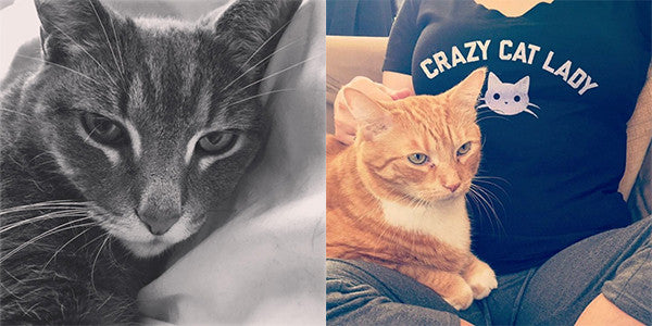 Boredwalk Clothing Brand Cat Mascots Oliver and Bigby