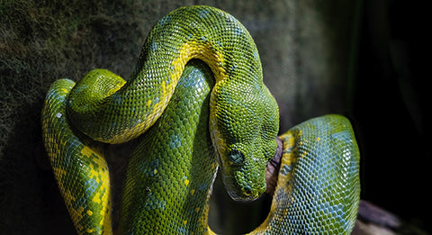 Snake photo by Thomas Hafeneth - Unsplash